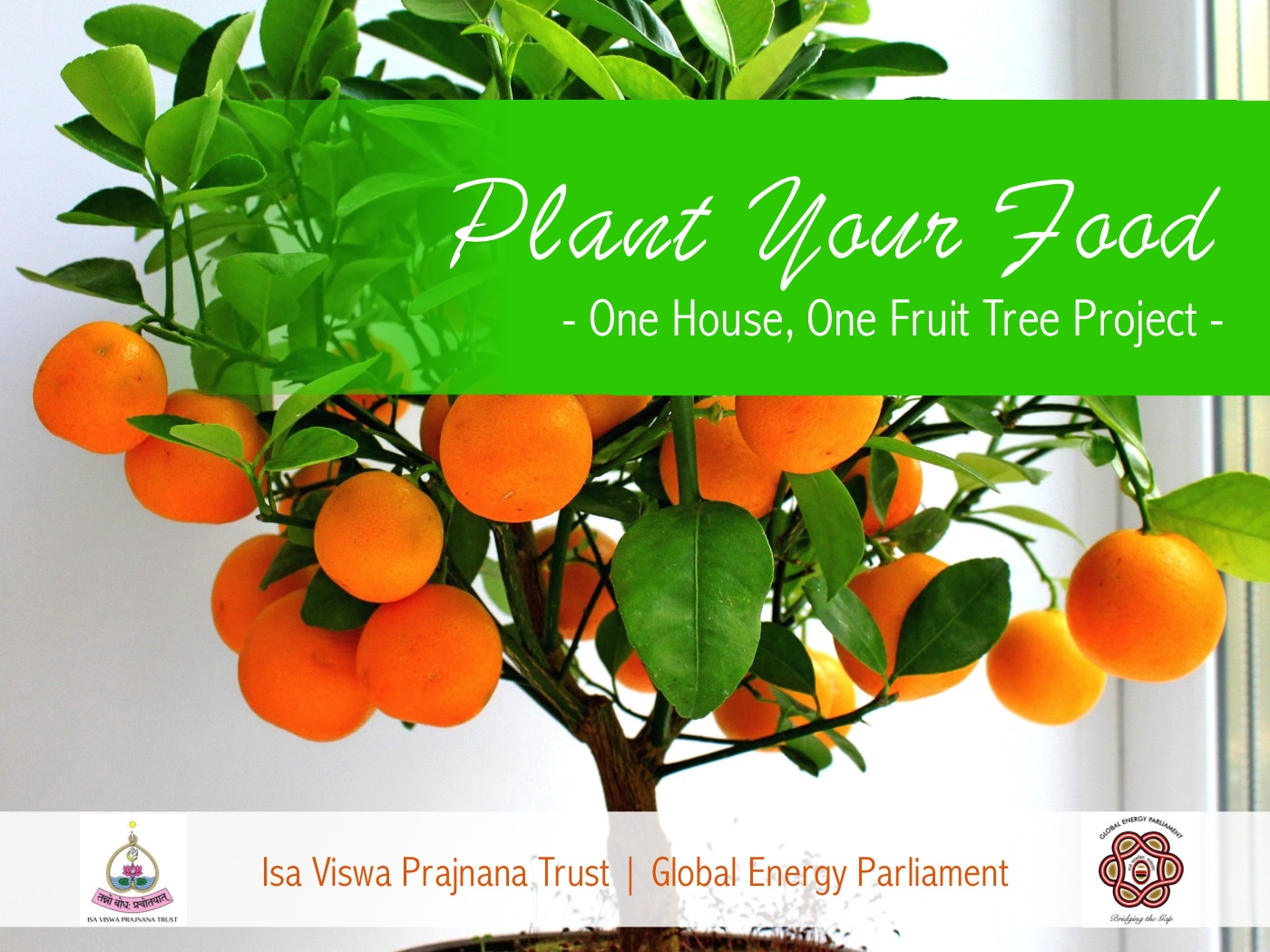 One House One Fruit Tree